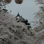 2006春-青森・弘前桜まつり